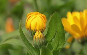 plante-detox